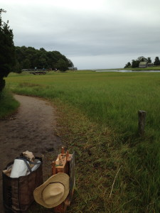 Salt Pond Marsh Trail